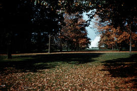 Gardens - United Kingdom - Royal Botanical Garden - Kew : distant view of the Palm House in autum...