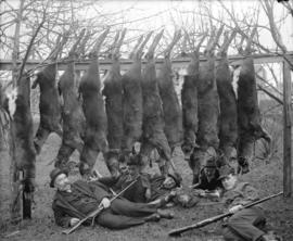[Five men lying on ground underneath twelve deer carcasses strung across two trees]