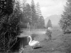 [View of the duck pond]