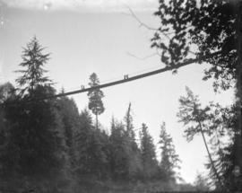 [View of Capilano Suspension Bridge from the ground]
