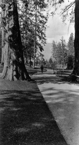 Pathways in Stanley Park looking north