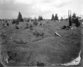 [Shannon's Farm pasture, Granville Street and 57th Avenue]