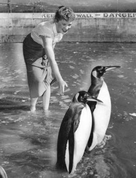 A woman and two penguins wade in the swimming pool at Lumberman's Arch