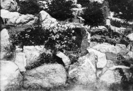 Pentstemon Scoulerii and Silene Acaulis [in rock garden at U.B.C.]