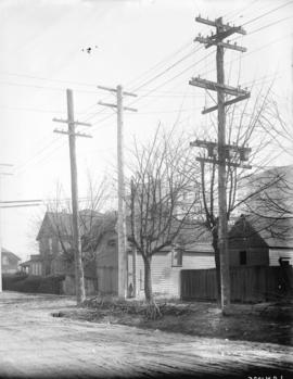 [Power poles and pruned trees on Burrard Street near Pender Street]
