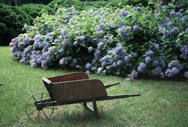 Gardens - United States : Atlanta Historical Society