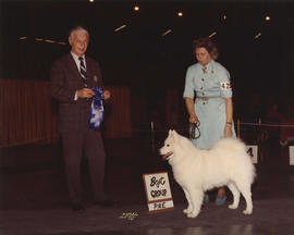 Best in Group award [Working Group: Samoyed] being presented at 1974 P.N.E. All-Breed Dog Show